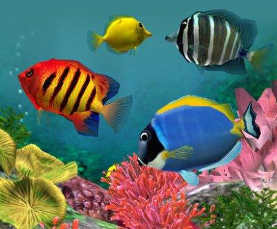 Ce sont des poissons exotique balistre poisson pecher for Poisson tropicaux aquarium