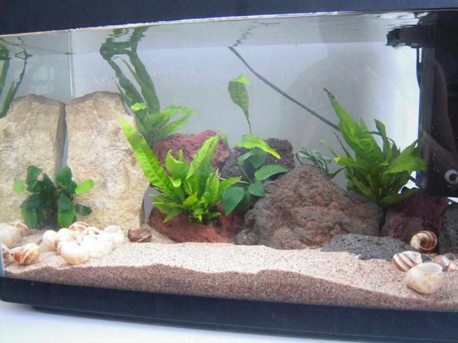 aquarium 54l conchylicoles 3107216535_2_3_Z4zdcBCL