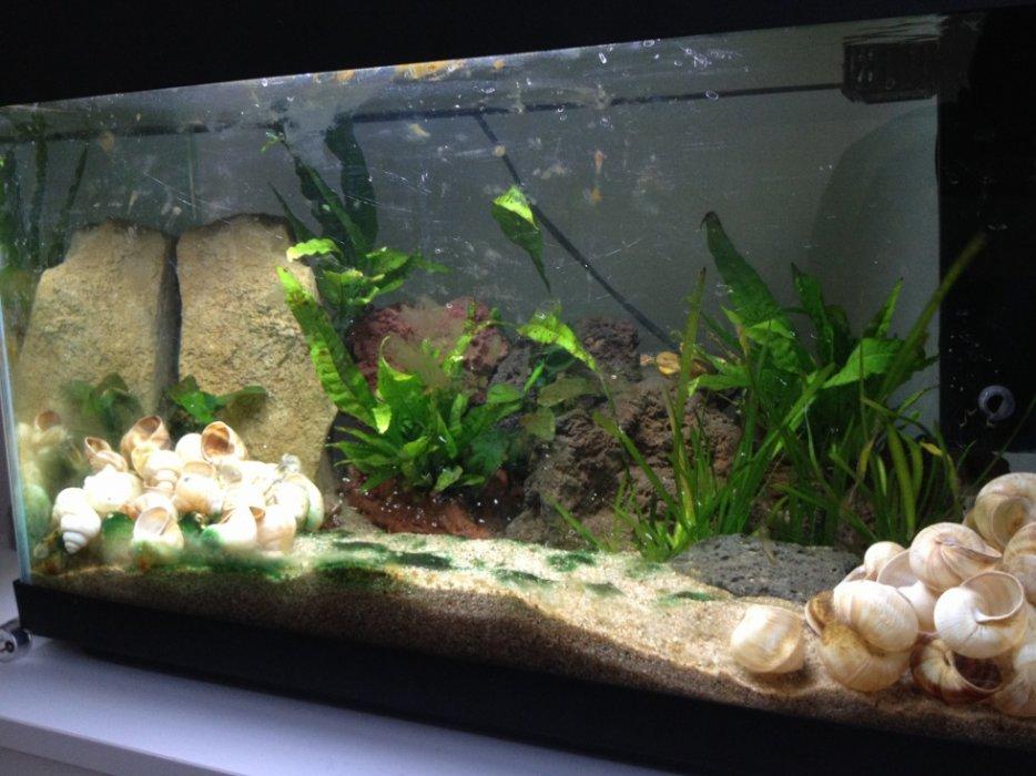 aquarium 54l conchylicoles 3111784875_2_3_gpj7Pki4
