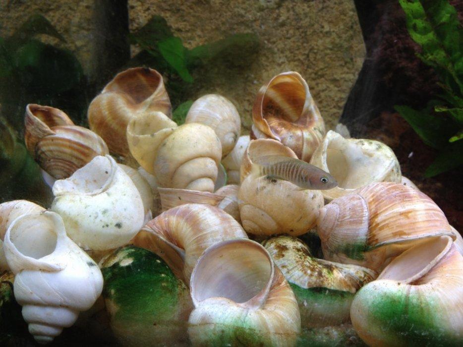 aquarium 54l conchylicoles 3111785479_2_3_R5lyCGT9