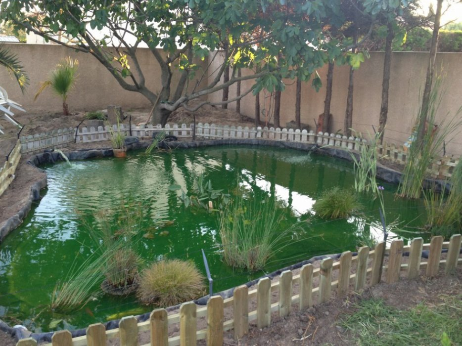Bassin koi 20m3 for Eau verte bassin exterieur